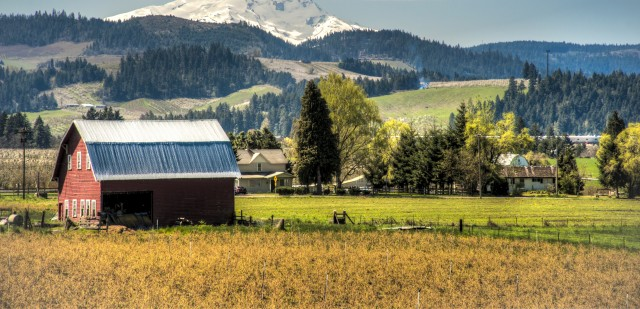 Red barn among apple orchards below a snowy mountain, Hood River Valley, OR
