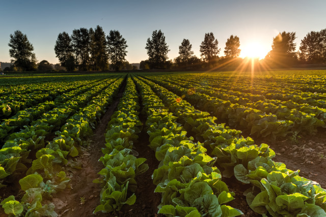 agricultural resource lands pierce county